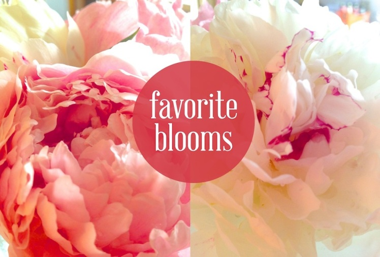 favorite blooms