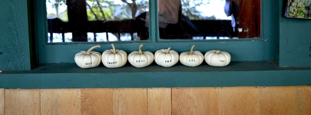 pumpkins lined up