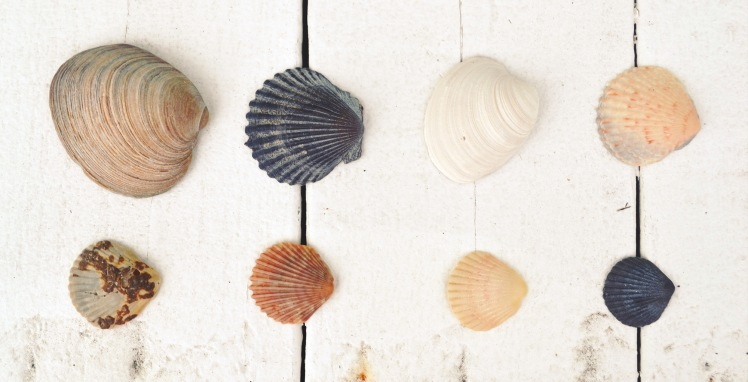 Outer Banks seashells