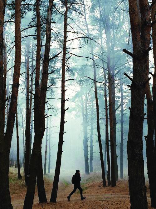 walk-through-the-woods