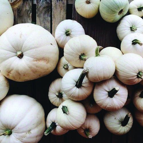 white-pumpkins