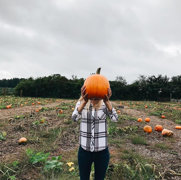 new_england_pumpkin_patch